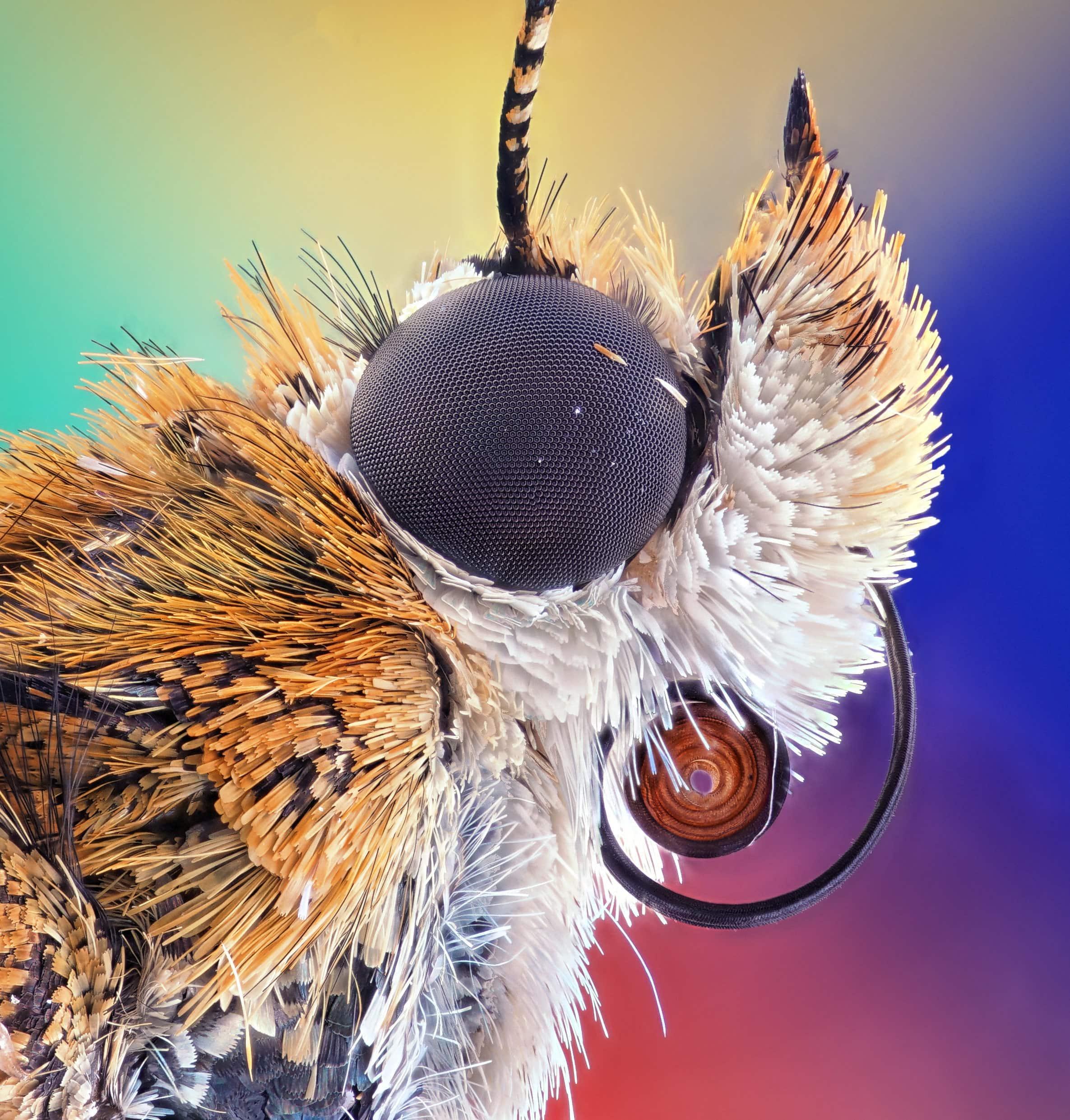Глаза мотылька