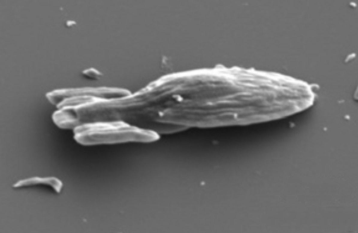 Микроскопический USSVoyager